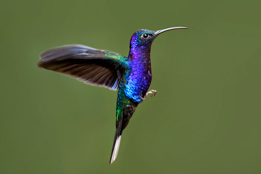 cute-beautiful-hummingbird-photography-9
